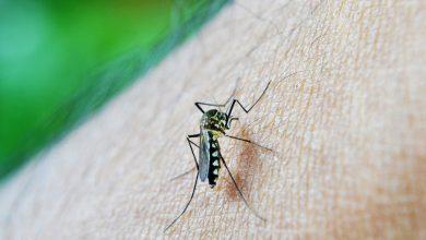 Photo of El aumento de la urbanización en África hará que los mosquitos piquen más